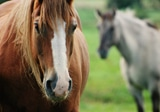 Equine Landcare Workshop: Property Planning and PIC Numbers