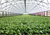 Protected Cropping for Horticulture Forum