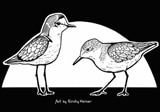 Shorebird-Vector-Thumbnail-1