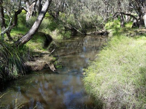Serpentine River Community Forum (Invitation Only)