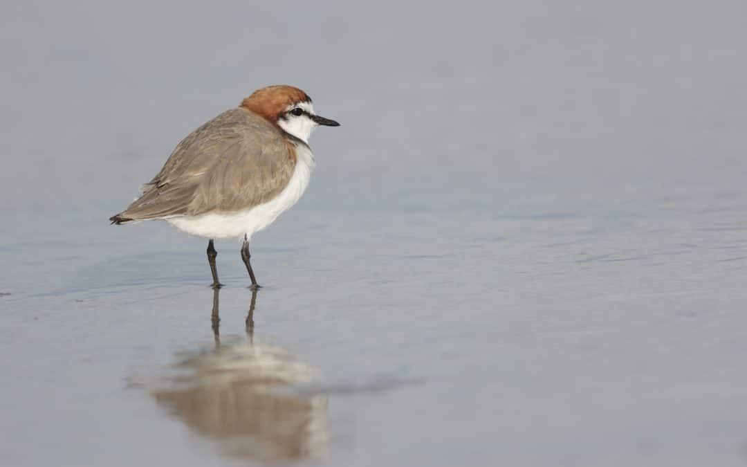 PHCC join global leaders to save migratory birds