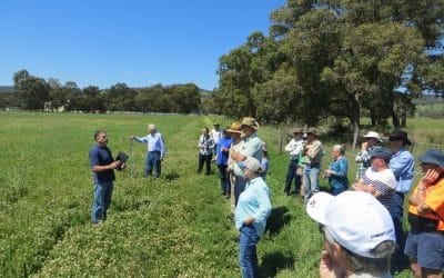 North Dandalup Farm Field Walk shows that it pays to test the paddock