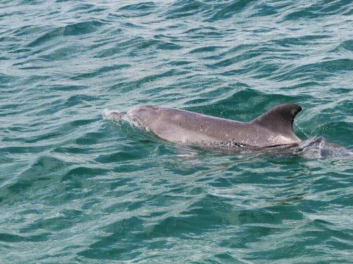 Mandurah Dolphin Forum