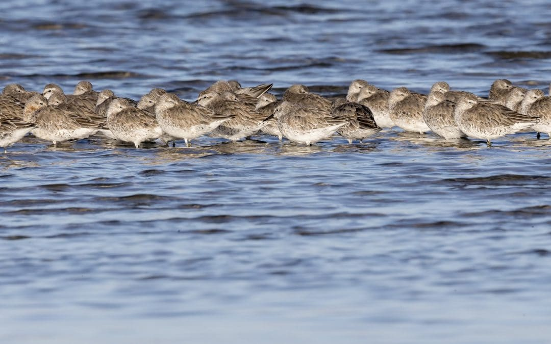 Say Goodbye to the Waders