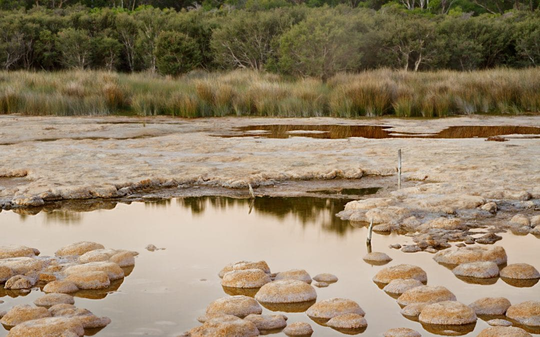 Lake Clifton Landcare Matters # 6
