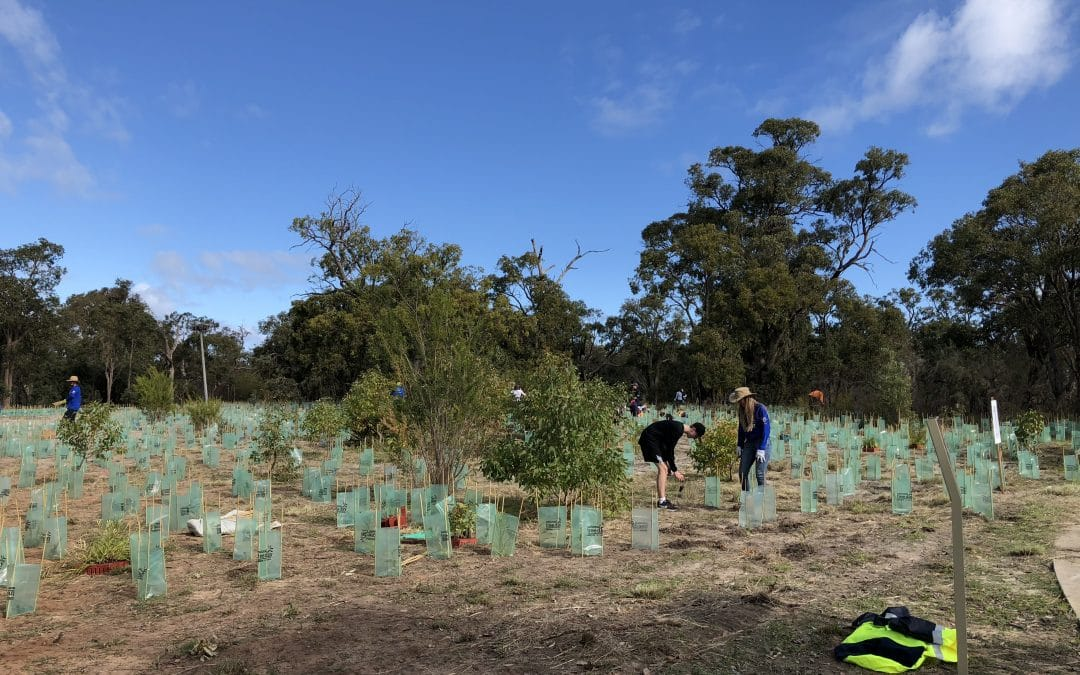 City of Mandurah National Tree Day 2019