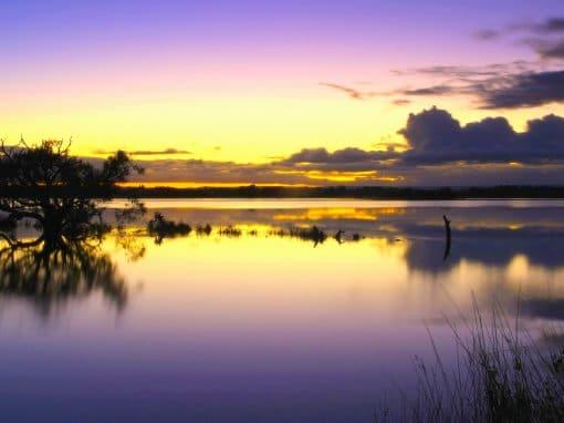 Wetland Walk and Talk