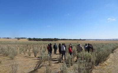 A new direction for salinity management in WA