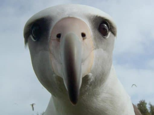 """Wetlands Weekender - Movie Night """"Albatross"""""""
