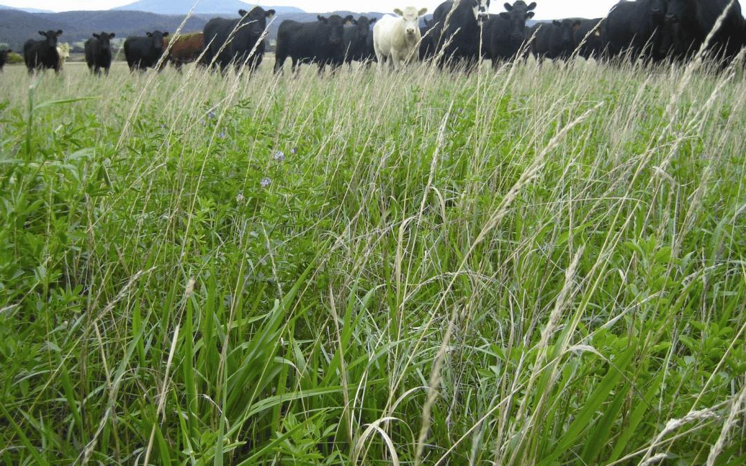 Regenerative Agriculture Conference