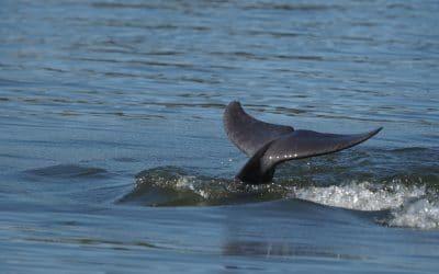 Dolphin Watch Mandurah