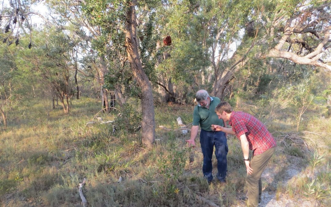 Planning for our Banksia Woodlands