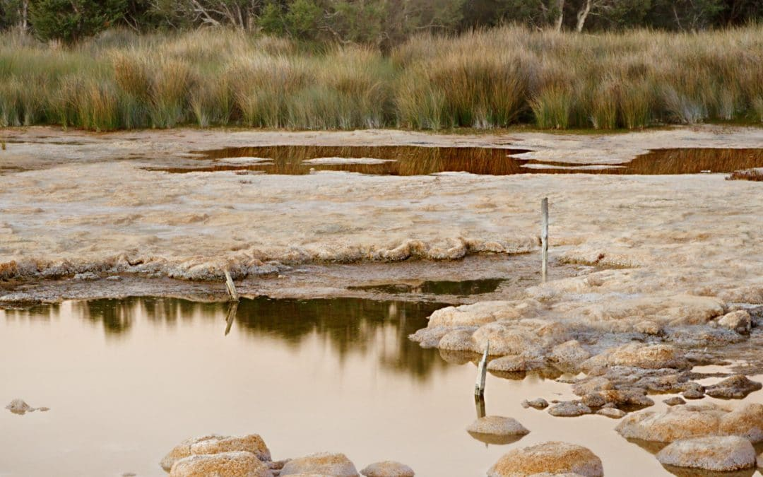 Defining research activities to develop environmental indicators of thrombolite health at Lake Clifton