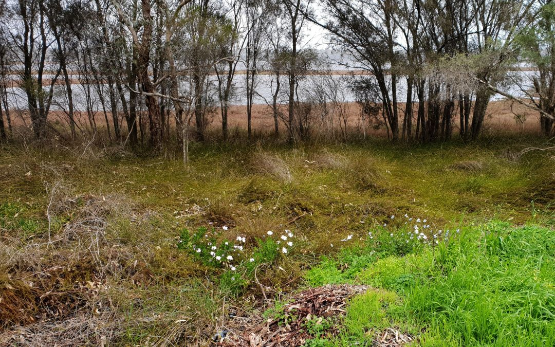 Garden Plants in our Wetlands and Bush