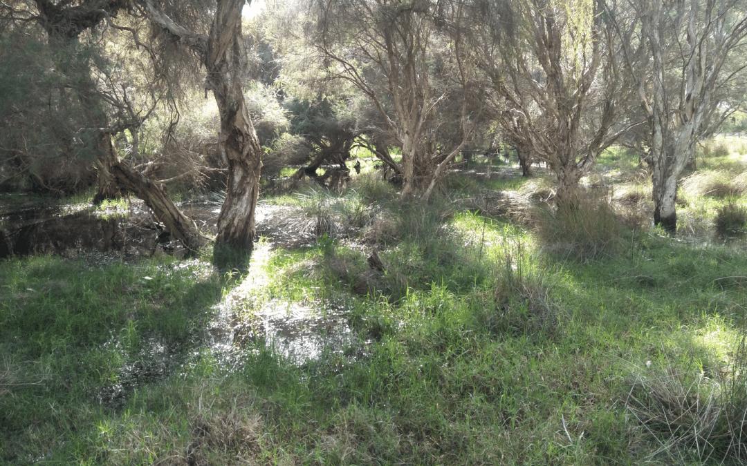 Hordacre Wetland weir