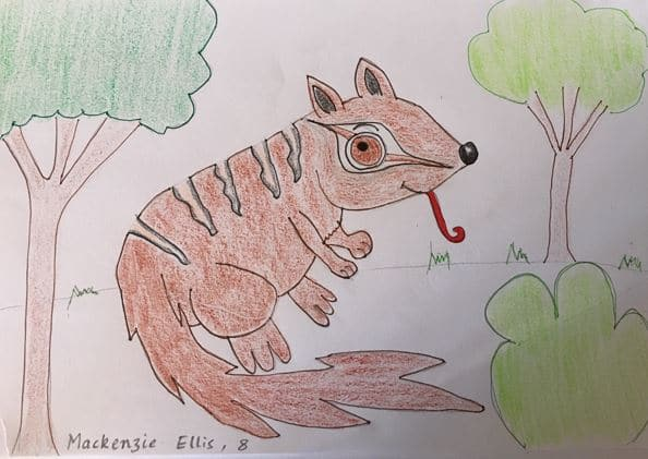 Move over Easter Bunny there is a Numbat in Town!