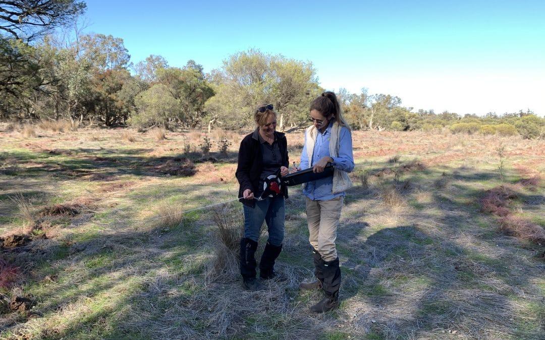 Vegetation Condition Monitoring Underway