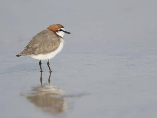 BirdLife Waterbird Information Session