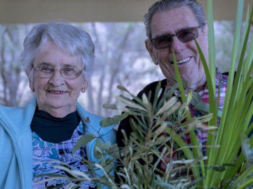 Lake Clifton Seedling Giveaway
