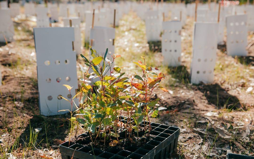 Tunbridge Gully Planting Event – Boddington