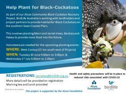 Help Plant for Black Cockatoos