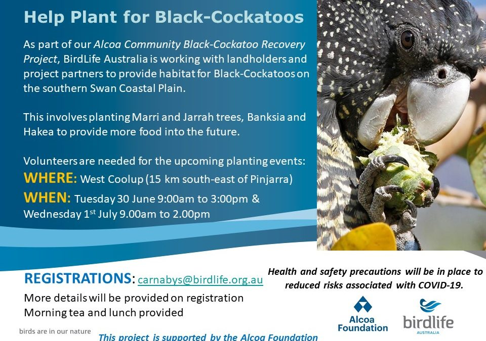 Help Plant for Black Cockatoos