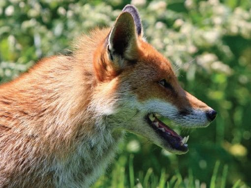 Fox Control - It's Not Too Late