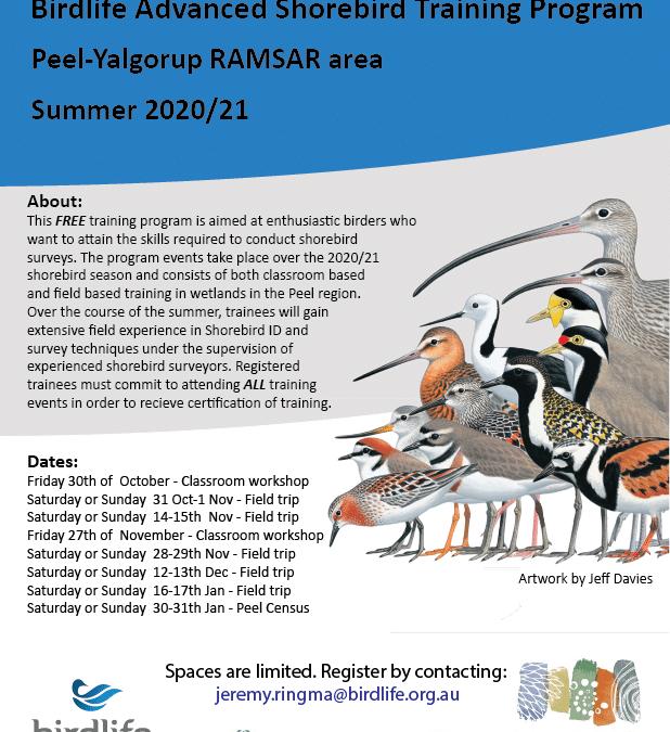 BirdLife Advanced Shorebird Training Program