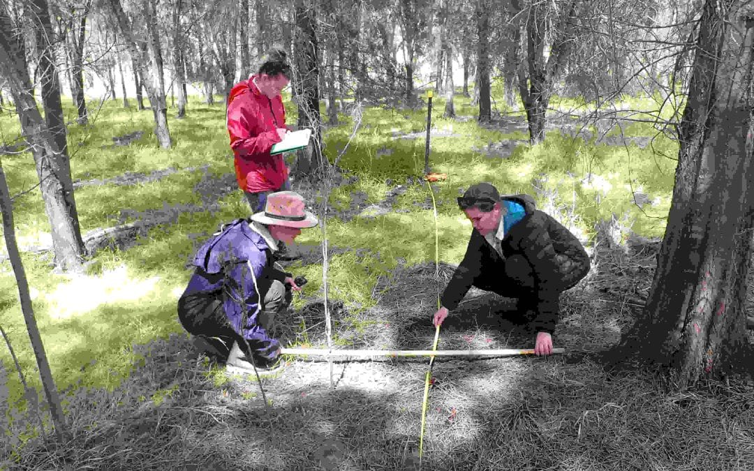 Eco Monitoring in Tunbridge Gully