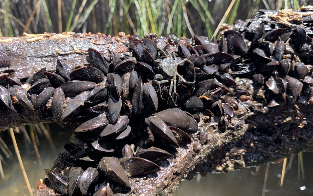 Mussel Up For the Murray – Mussel Basket Kit Handout