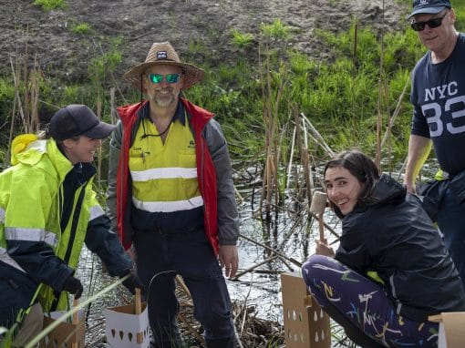 Lend a Hand for Riverlea Woodland (Planting Day)