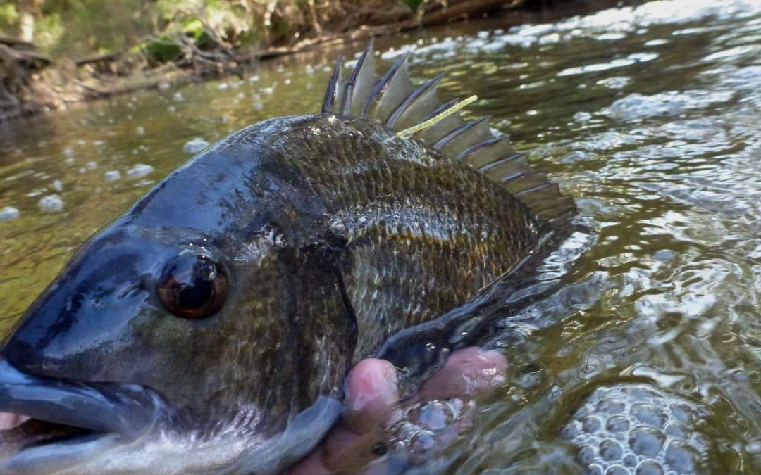 Spotlight on Recreational Fishers in the Peel-Harvey