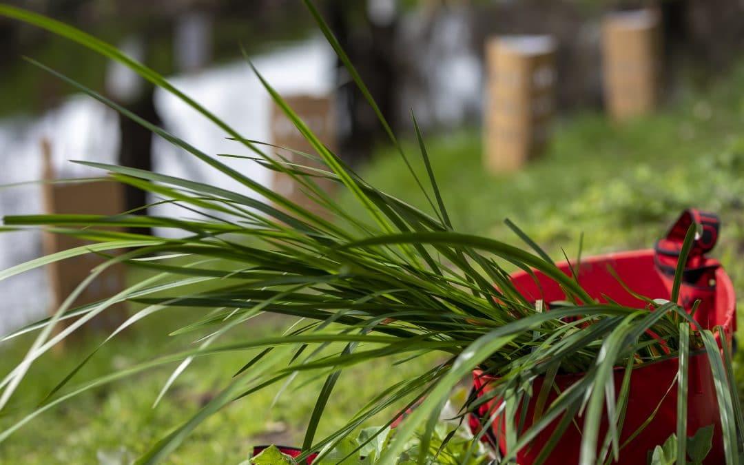 Karu Bilya Planting Day (Closed Event)