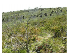 Melaleuca systena shrublands on limestone ridges