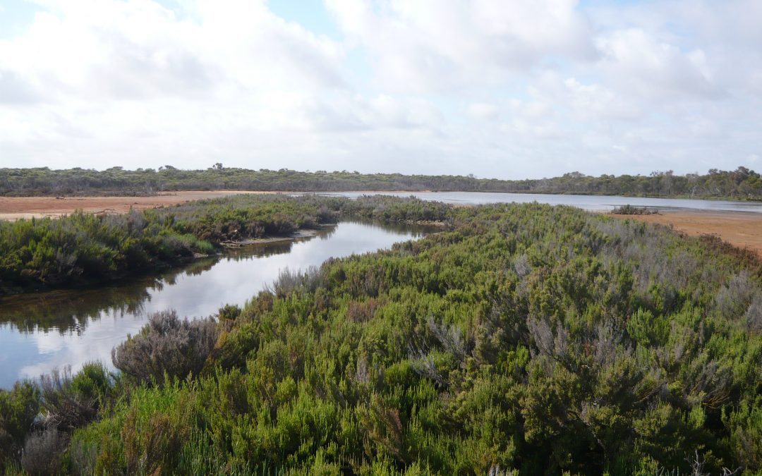Subtropical and Temperate Coastal Saltmarsh