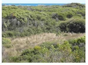 Sedgelands in Holocene dune swales of the southern Swan Coastal Plain