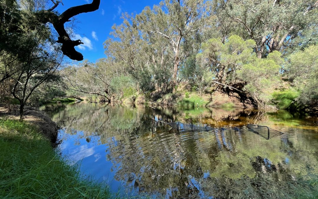 How Healthy is the Murray River?