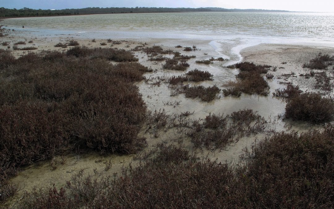 Good Rains Linking Yalgorup Lakes Wetlands