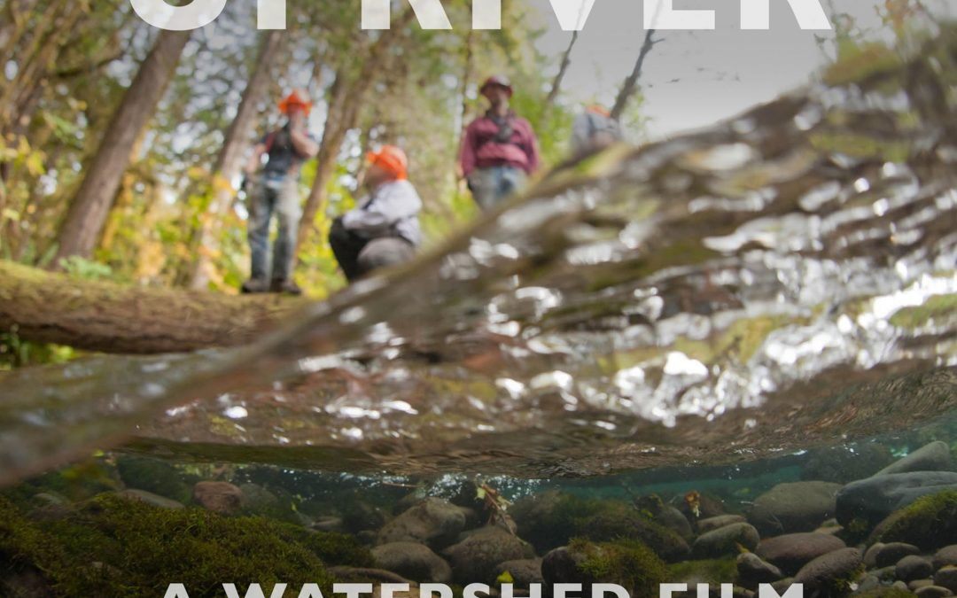 Harvey River Festival: UPRIVER Outdoor Feature Screening