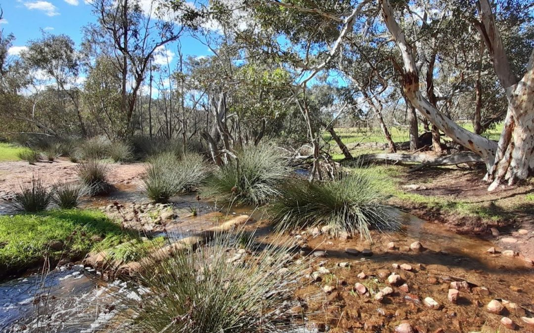 Landcare Solutions for Pointed Problem